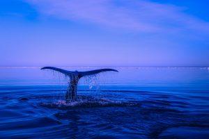 Ballenas en aguas Mexicanos