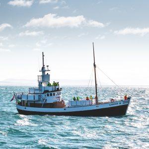 barco-observador-de-ballenas