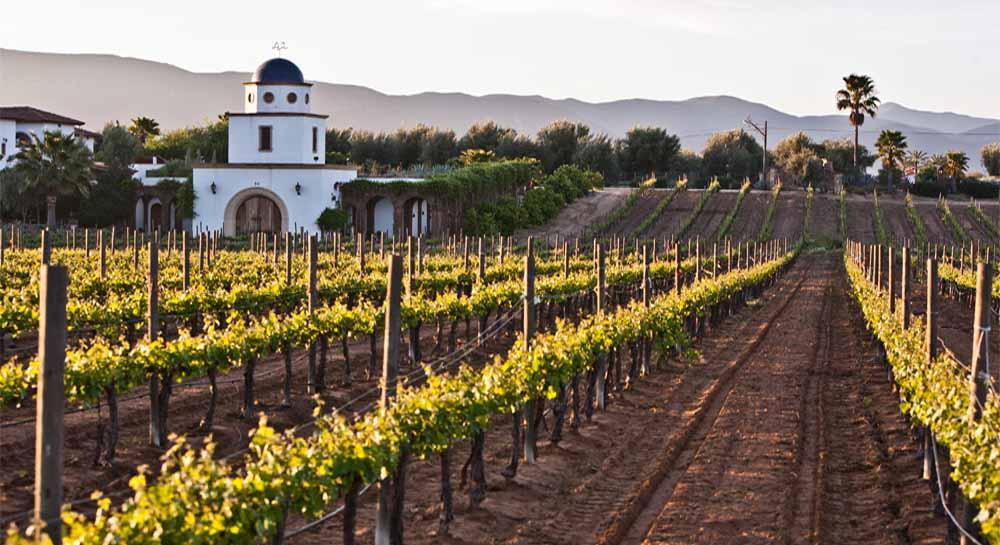 Coahuila y los viñedos